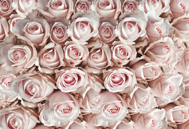 roses_image